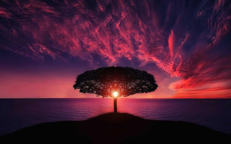 夜明けの光に照らされる大きな木